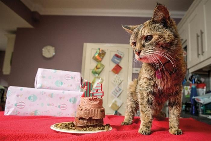 2014年被认定为全球最长寿的猫Poppy活到了24岁