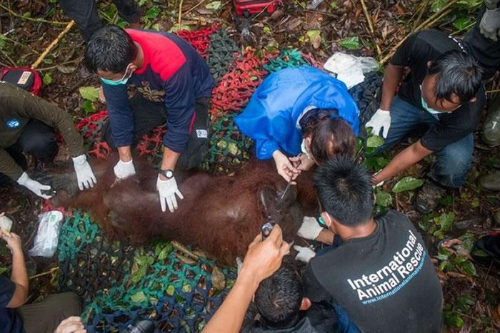 救援人员在帮它进行简单的身体检查