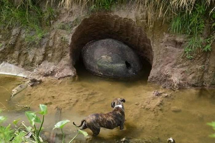 阿根廷首都布宜诺斯艾利斯市郊发现史前巨兽雕齿兽甲壳化石