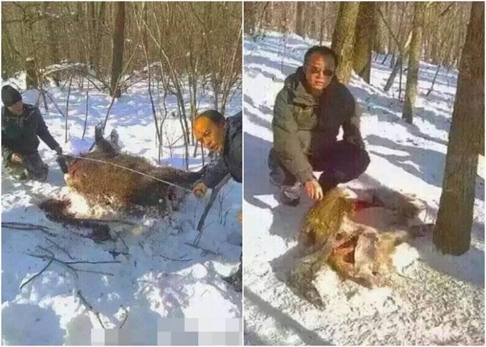大野猪曝尸山区,其内脏几被挖空。