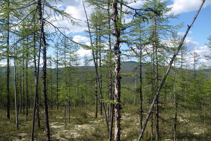 气候变化可能与地球的某些大片地区的同步的树生长模式有关联
