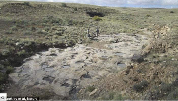 """最新研究发现恐龙懂得""""史前爱抚前戏"""",交配前用爪子在地面上挖""""爱巢"""""""