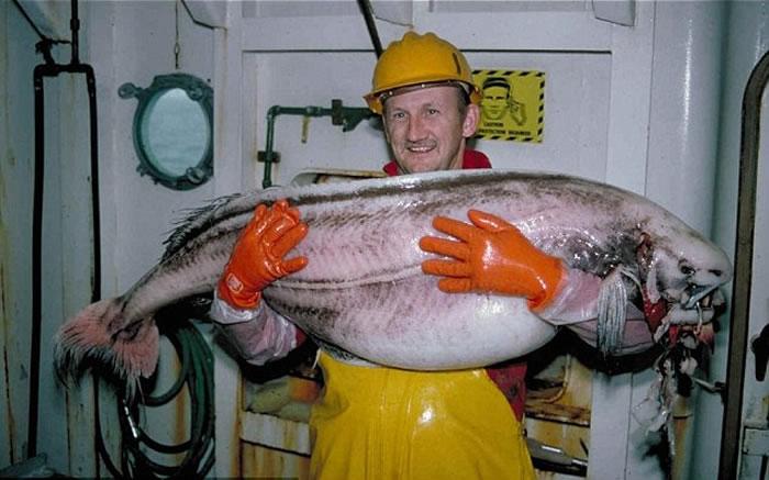 去年7月份也曾在岸边发现过这种鱼