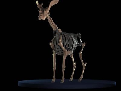 地球史上体型最大的反刍动物