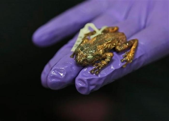 研究人员展示新发现的树蛙