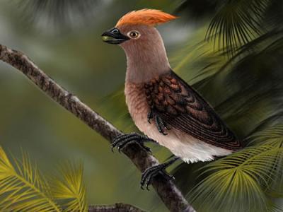 辽宁大平房早白垩世九佛堂组发现热河生物群一类新的基干鸟类化石:郑氏重明鸟