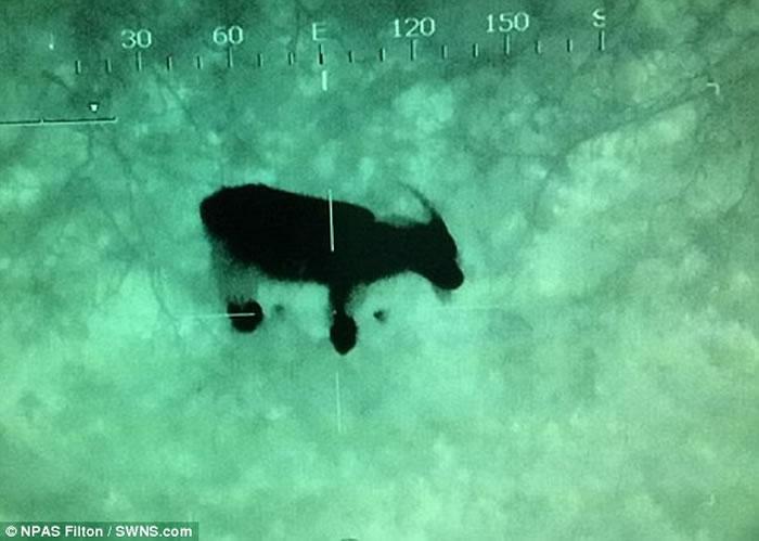 """英格兰""""自杀峡谷""""传来神秘哭声 直升机搜救找了半天找到一只山羊"""