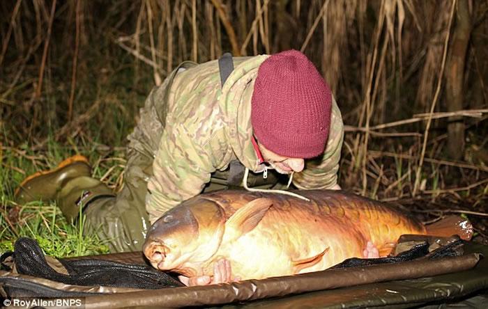 英国男子Dean Fletcher钓起31公斤鲤鱼,是全英捕获最大淡水鱼