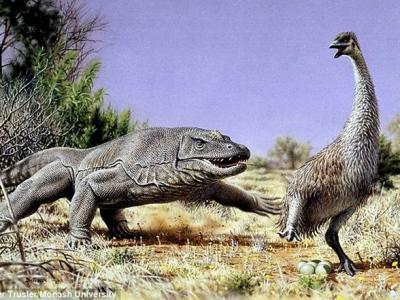 """澳大利亚史前""""牛顿巨鸟""""的灭绝与原始人类活动有关"""