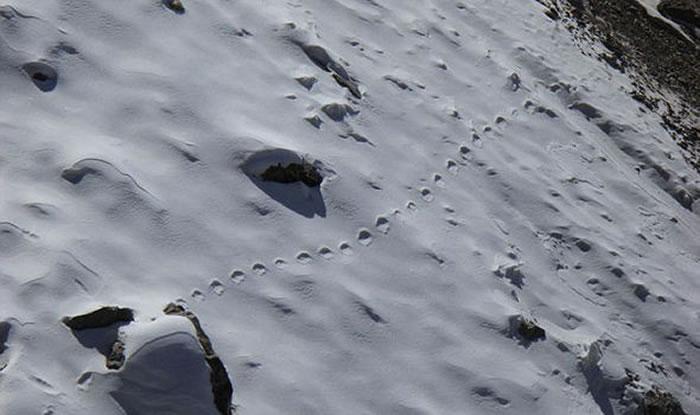 传说中的雪人现身?喜马拉雅山深处发现一组直线大脚印