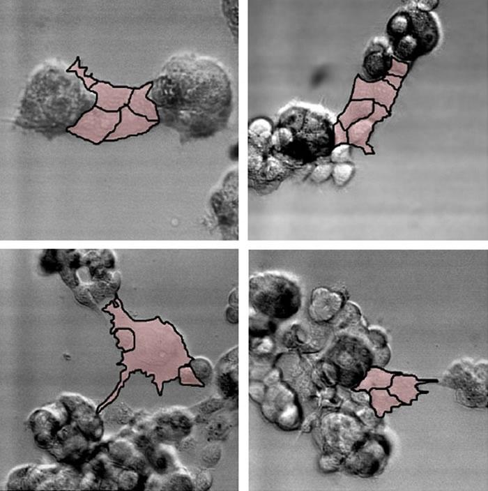 美国科学家利用3D摄影技术首次成功追踪癌细胞在人体内活动