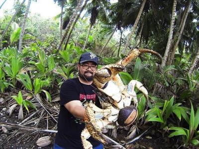 澳洲圣诞岛树林发现一只半个人大小的椰子蟹