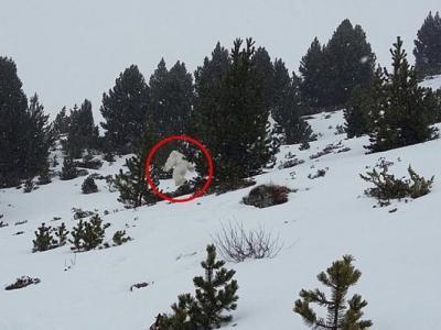 """西班牙滑雪圣地出现疑似不明生物""""喜马拉雅山雪人""""(Yeti) 迅速穿过树林"""