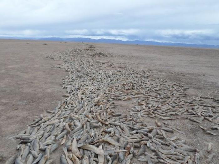 玻利维亚第二大湖泊波波湖已完全蒸发