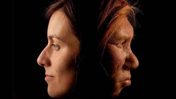 尼安德特人和现代人类繁衍后代时留下有害基因传承