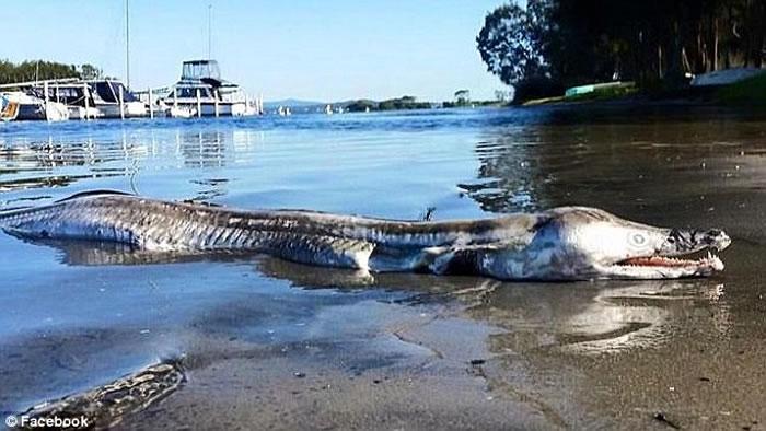 海豚头鳄鱼身深水海怪冲上澳洲湖岸