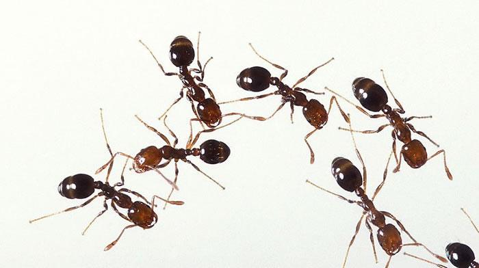 """蚂蚁群中的""""懒汉""""反而有助于群体的长期发展"""