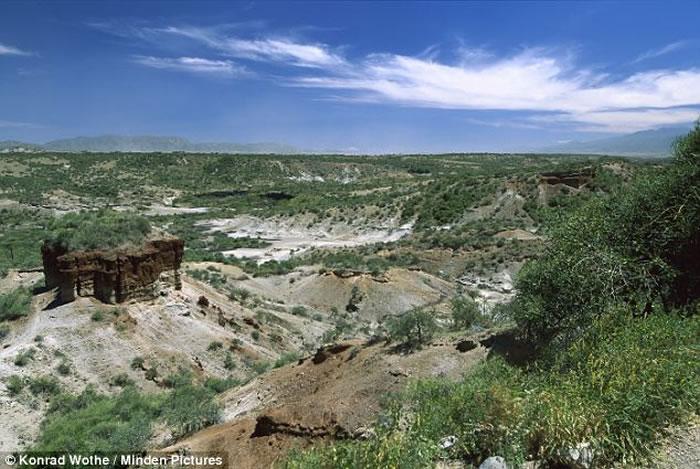 植物分子化石揭示坦桑尼亚Olduvai峡谷早期人类栖息地细节