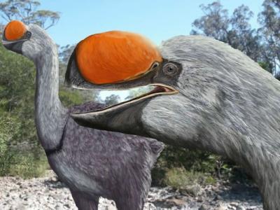 澳洲昆士兰发现地球上最巨型鸟类的祖先化石 距今2600万年