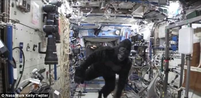 """国际太空站竟然出现一只""""大猩猩"""""""