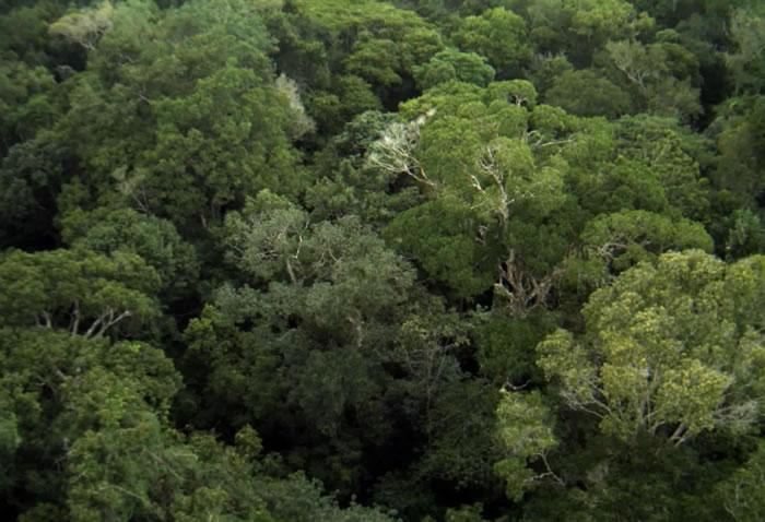 树叶的品质而非丰度决定森林吸收碳的能力