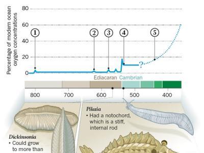 5.4亿年前一场生物进化造就多样性海洋动物 点燃寒武纪大爆发