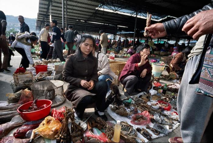 猴头、熊胆与其他珍奇动物部位都在缅甸勐拉市市场陈列贩售。 PHOTOGRAPH BY BEN DAVIES, LIGHTROCKET