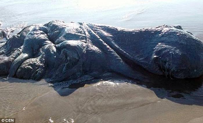 墨西哥海滩出现一具巨型神秘海洋生物尸体