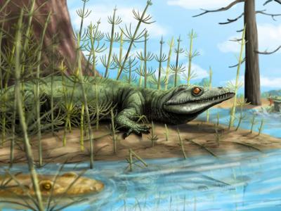 巴西发现2.5亿年前爬行动物Teyujagua paradoxa头骨化石 填补进化史上缺失一环