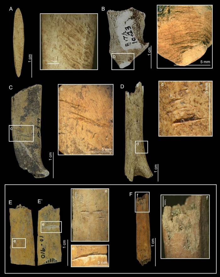 人类在6200年前进入巴拿马佩德罗·冈萨雷斯岛导致侏儒鹿灭绝