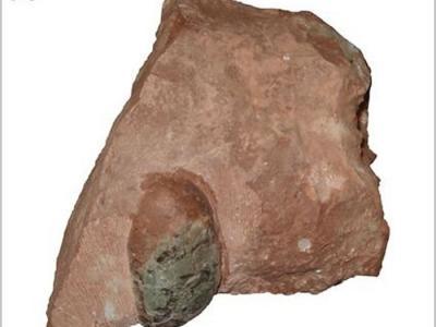浙江缙云发现早白垩世鸟蛋化石标本:缙云厚盔蛋
