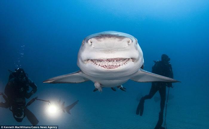 美国潜水爱好者在佛罗里达州海域拍摄到柠檬鲨咧嘴憨笑的搞笑画面