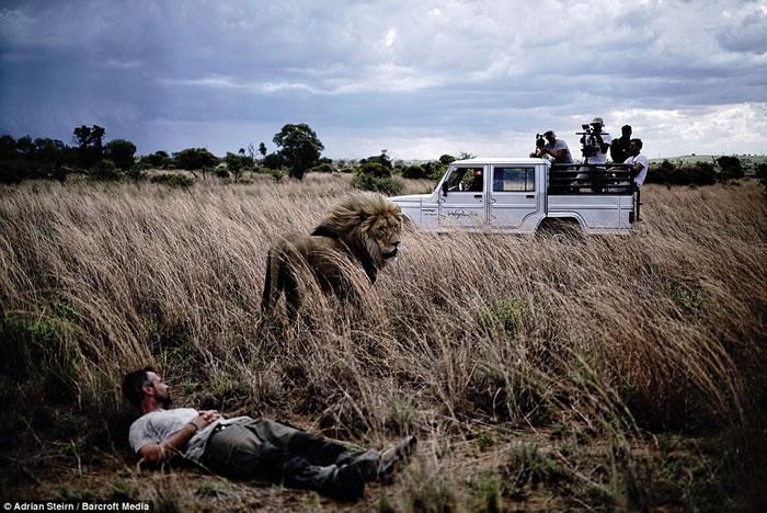 """南非""""狮语者""""Kevin Richardson与狮子亲密拥抱如家人"""