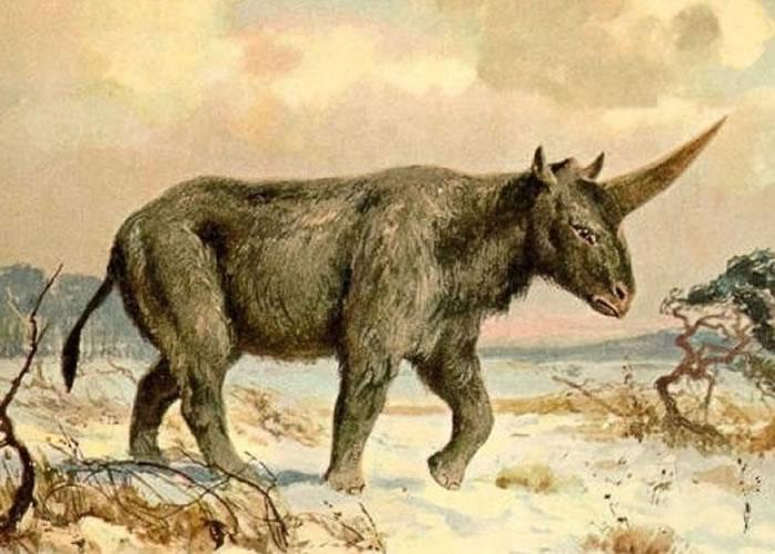 """板齿犀有""""西伯利亚独角兽""""之称。图为画家笔下的板齿犀。"""