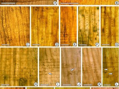 辽西热河生物群木化石新发现揭示其季节性古气候特征