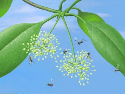 古昆虫新目研究揭示昆虫咀嚼式口器向刺吸式口器的过渡