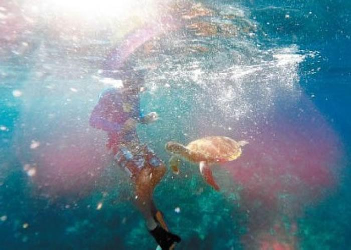 游客可在海底,零距离观察海洋生物。