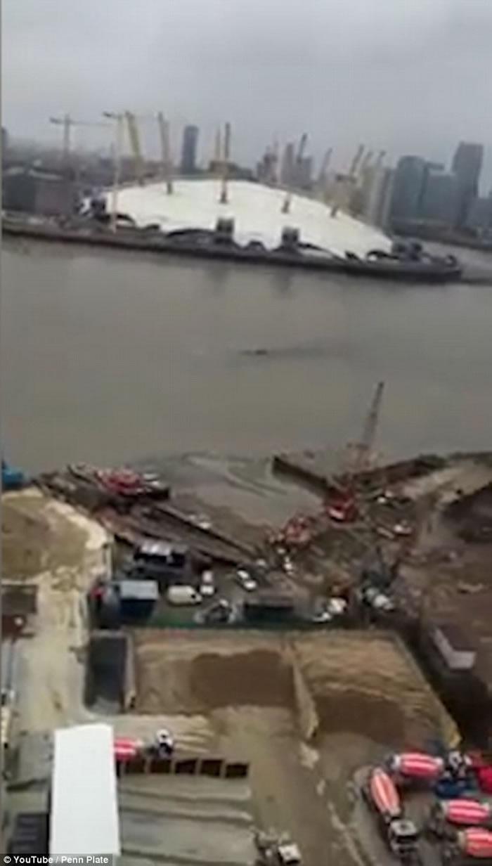尼斯湖水怪到伦敦度假?英国泰晤士河拍到巨大怪物河中游过