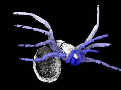 法国发现3.05亿年前疑为蜘蛛近亲的化石Idmonarachne brasieri