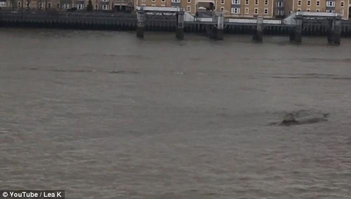 英国泰晤士河又现浮沉巨物 水怪之说更嚣尘上