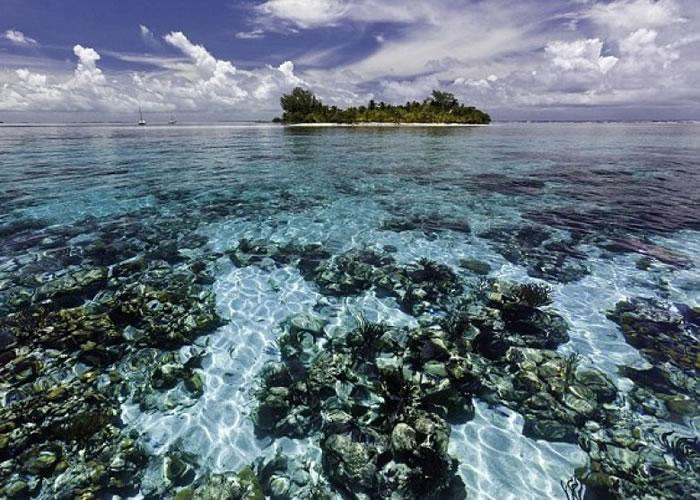 伯利兹堡礁有上千野生生物物种。