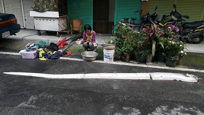 """台湾清晨接连发生两起地震后捕获地震鱼""""皇带鱼"""""""