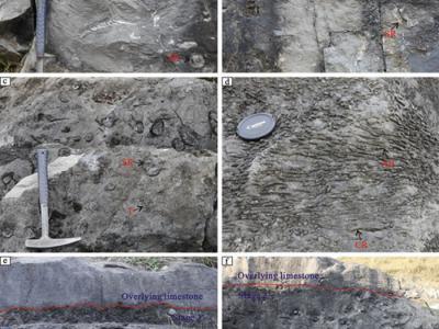 华南早石炭世维宪中期珊瑚层研究新进展