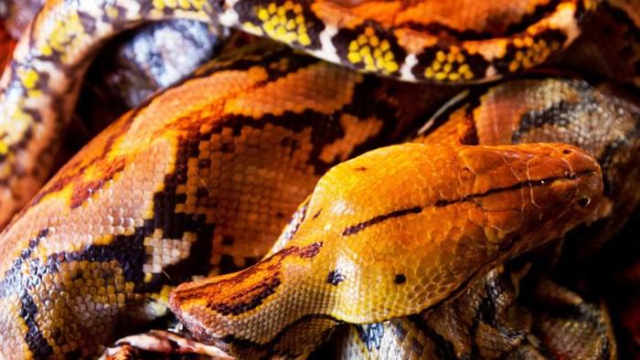 市集连蠎蛇亦有售。