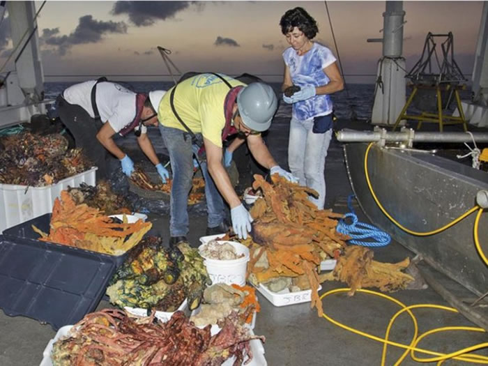 科学家取得不少珊瑚样本研究。