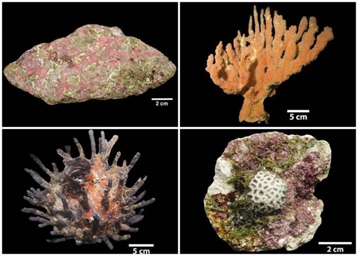 珊瑚礁中有不少种类的珊瑚。