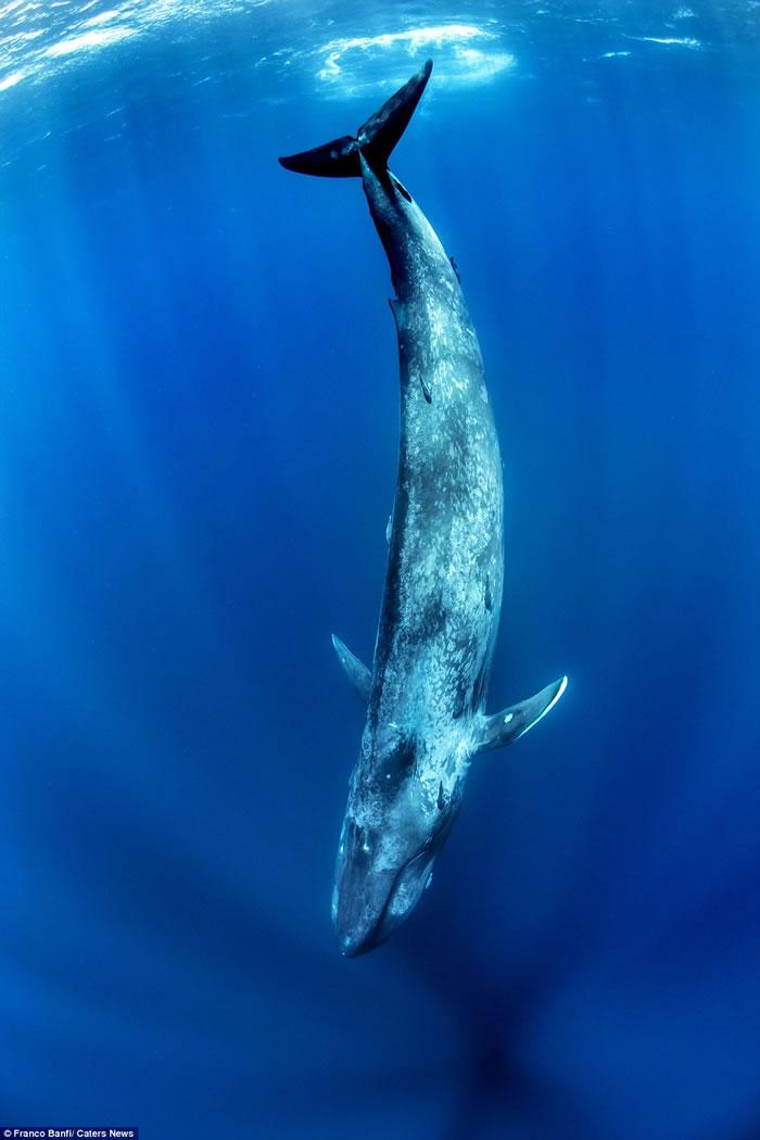 瑞士摄影师在斯里兰卡出海遇上蓝鲸在身边游过