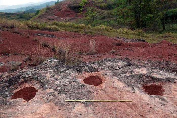 大型鸭嘴龙类脚印化石。(来源:大洋网 王申娜摄)