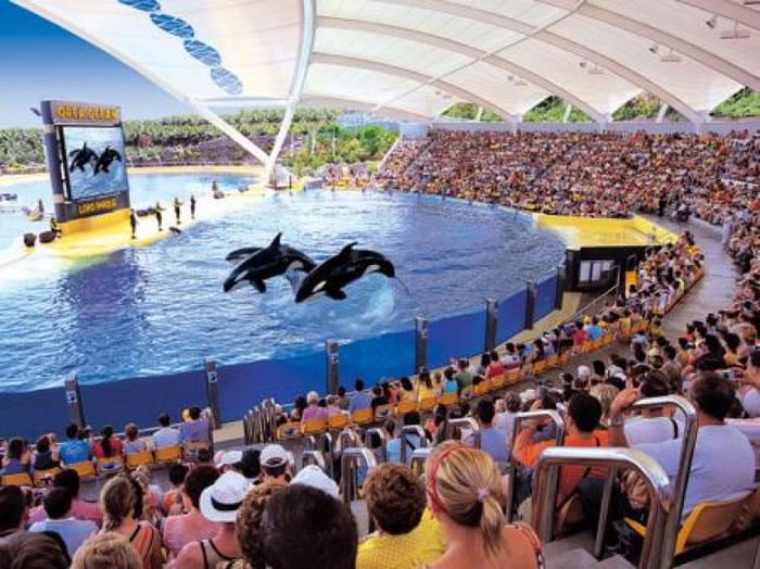 鹦鹉公园的杀人鲸表演吸引不少游客。