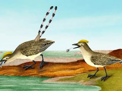 最古老的鸟类食团揭示早期鸟类的消化系统 首次揭示反鸟类能够以鱼类为食